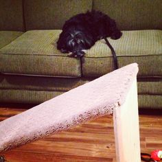 Build this quick and easy DIY Dog Ramp for your dog.