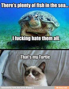 That's grumpy cats turtle. Cute Animal Memes, Cute Funny Animals, Cute Baby Animals, Funny Cute, Hilarious, Animal Humor, Animal Pics, Animal Quotes, Super Funny