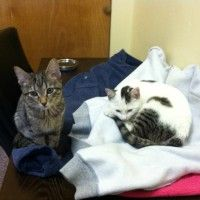 Tilda and Danny (PAWS names Pie and Clarinda)  #pawschicago #pawsalumni
