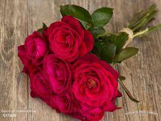 Scented Rose Extase