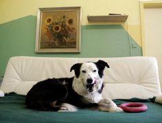 Fernsehprogramm: Erster TV-Sender nur für Hunde