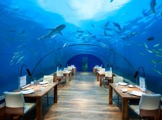 The world's first all-glass undersea restaurant is located 16 feet below sea level at the Conrad Maldives Rangali Island Hotel. Ithaa serves caviar and Maldivian lobster—just a couple of the menu items to be enjoyed while taking in the 180-degree panoramic views of the water above you.  Related: 7 Best Underwater Restaurants Around the World