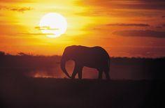 Nature sauvage. l inspirations et idées l   Pour plus d'idées, cliquez ici : http://www.brabbu.com/all-products/