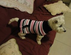 in her Dogue pullover
