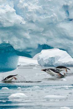 Porpoising penguins viewed through a hole in an iceberg in Neko - Antartica Overseas Adventure Travel, Snow Art, Plein Air, Marine Life, Beautiful World, Simply Beautiful, Beautiful Places, Pet Birds, Wonders Of The World