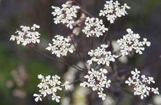 Opis Ogrodnictwo - Terminowe Ogrodnictwo Porady Crocus.co.uk
