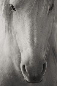 Horse / beauty