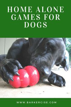 Games For Puppies, Dog Games, Loyal Dog Breeds, Loyal Dogs, Dog Boredom, Boredom Busters, Dog Training, Training Tips, Training Courses