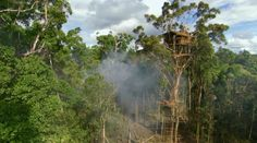 This is the home of the Korowai tribe in West Papua, a jungle high-rise home 35 metres up in the tree tops.