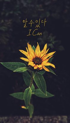 Photo by Nick Nice on Unsplash Korean Words Learning, Korean Language Learning, Wallpaper Quotes, Iphone Wallpaper, Korea Quotes, Learn Hangul, Korean Lessons, Korean Phrases, Sunflower Wallpaper