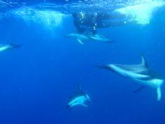 Dolphin-swim-in-NZ