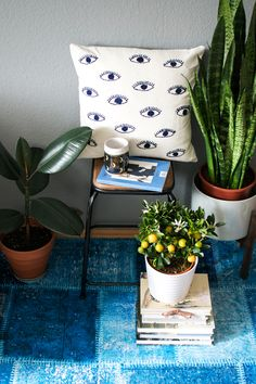 Semi-shade loving plants: Rubber plant and Snake plant