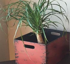 NASA Clean Air Study Plants that are Dog and Cat Safe, non-toxic and will improve indoor air quality | Spider Plant | Toxic vs Safe plants for Pets | ASPCA.