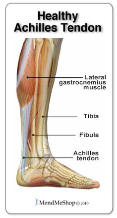 A healthy Achilles tendon will remain flexible, providing control of your foot when walking, running or moving up or down a flight of stairs. If any of these activities are impaired your Achilles tendon may be injured. Knee Arthritis Exercises, Foot Exercises, Ankle Anatomy, Soft Tissue Injury, Achilles Tendon, Ankle Surgery, Ankle Pain, Plantar Fasciitis, Fibromyalgia