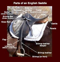 http://www.lrgaf.org/guide/Parts%20of%20an%20English%20Saddle.jpg- This is a picture of a hunt seat saddle.