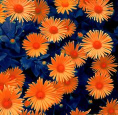 I just can't get enough of this color combo. Orange and Blue by ~ BenJTodd on deviantART