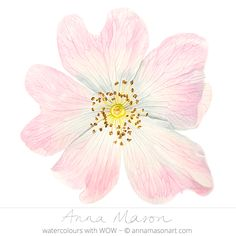 "Wild Rose © 2009 ~ annamasonart.com ~ 23 x 23 cm (9"" x 9"") #AnnaMasonNewSite"