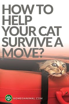 Know the beneficial tips about how to help your cat survive a move. Read all 5 beneficial tips so that you can become best pet parent
