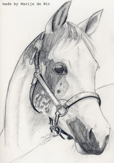 Horse by Cedecode on DeviantArt Horse Head Drawing, Horse Drawings, Pencil Art Drawings, Animal Drawings, Cute Drawings, Sailboat Painting, Bird Sketch, Horse Portrait, Scratchboard