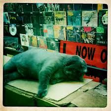 Record store cat