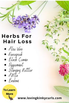37 Best Herbs for Natural Hair Growth Herbs For Hair Growth, Natural Hair Growth Tips, Hair Growth Oil, Natural Hair Care, Natural Hair Styles, Ayurvedic Hair Care, Thick Natural Hair, Diy Hair Treatment, Hair Loss Cure