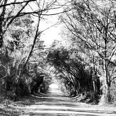 Cottondale, Florida