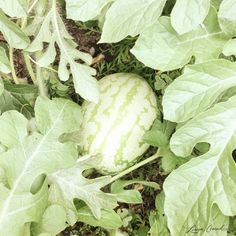 Green Thumb: How to Start a Vegetable Garden