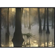 Global Gallery Bald Cypress Grove in Freshwater Swamp at Dawn, Lake Fausse Pointe, Louisiana by Tim Fitzharris Framed Photographic Print on Canvas in Color
