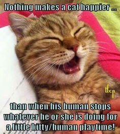 Catness