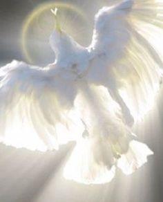 Dove of Peace❤️Holy Spirit Prophetic Art. Art Prophétique, Image Jesus, Saint Esprit, Prophetic Art, White Doves, Holy Ghost, Christian Art, Religious Art, Beautiful Birds