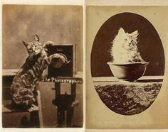 The original LOLcats!  Sometime in the 1870s, British photographer Harry Pointer made the greatest breakthrough in the history of cat photography. He'd long been shooting carte-de-visite (kind of like a postcard) photos of cats doing cat things — sleeping, drinking milk — but epiphany struck: He started taking shots of cats in a bunch of goofball poses. Even better, he realized he could meme-ify the pictures by adding silly written phrases to his prints.