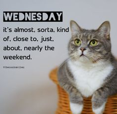 Wednesday : it's almost, sorta, kind of, close to, just about, nearly the weekend. #Wednesdayquotes #Wednesdaysayings #Catmemes #Funnywednesdayquotes #Wednesdymemes #Wednesdaymorningquotes #Morningquotes #Goodmorningquotes #Wednesdaymotivation #Inspirationalwednesdayquotes #Dailyquotes #Everydayquotes #Instaquotes #Instastories #Quotesandsayings #Memes #therandomvibez