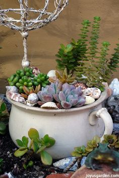 Tour My Garden With Me - a little succulent garden in a chamber pot.