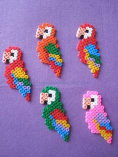 Loros Hama Beads