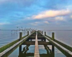 Es ist Freitag. Möwenalarm zum Wochenende.  #steinhude #steinhudermeer  #runkeeper #pier #5k  #nature #sky #twilight #seagull #seagulls #light #cloudporn #weather #photooftheday