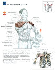 Single Dumbbell Front Raises ~ Re-pinned by Crossed Irons Fitness | Repinned www.pinterest.com/muskelfarm/