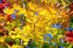 Knallig bunt kommt der #Herbst daher. Foto: Marco Kneise
