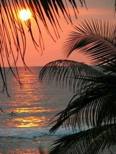 16 Ideas For Nature Photography Ocean Hawaii Palm Trees Palm Tree Art, Palm Tree Sunset, Sunset Beach, Beach Sunsets, Hawaiian Sunset, Sunset Pics, Palm Trees Beach, Malibu Sunset, Sunset Quotes