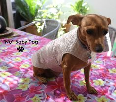 Impermeable en Pique beis con topos blancos, acolchada y plastificada, ideal para los dias de lluvia y que nuestras mascotas puedan salir a pasear.
