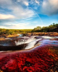 >>> Caño Cristales is a very unique natural wonder located in the Serrania de la Macarena province of Colombia. It is surely one of the… Countries To Visit, Places To Visit, Cool Pictures, Beautiful Pictures, Going On A Trip, Travel Articles, Natural Wonders, Travel Inspiration, Travel Destinations