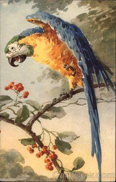 Parrot C. Klein Birds