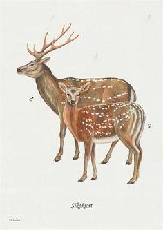 Moose Art, Retro, Animals, A4, Products, Nature, Politics, Dekoration, Animales
