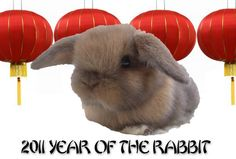 Year belongs to rabbit