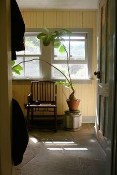 パキラのすっとシンプルな葉は、ムダのないデザイン、植物の美しさを素直に感じられる、といった印象ですね。