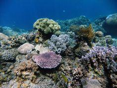 Coral reef, Satonda Island