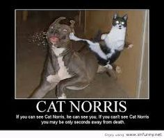 crazy cats with guns - Google Search