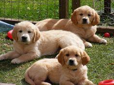 adorable threesome!