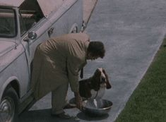"""Columbo gives up on giving Dog water. Like the saying goes, """"You can give a dog a bowl of water, but you can't make him drink. Columbo Peter Falk, Before I Forget, Tv Detectives, Perry Mason, Dogs Of The World, Love Him, Doggies, Pop Culture, Movie Tv"""