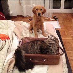 Please don't leave...