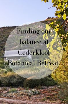 In our latest blog we tell you more about the healing power of the Cederkloof Botanical Retreat and how this wonderful place came about.  #Cederkloof #botanical #retreat #botany #recycling #Cederberg #healingpower #rejuvenate #blog #TG Alone With My Thoughts, Pink Mountains, Healing Power, Going On Holiday, Fun To Be One, Botany, Where To Go, Road Trips, Wonderful Places